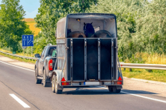 Significant-Tips-On-how-to-Select-The-Appropriate-Horse-Trailer