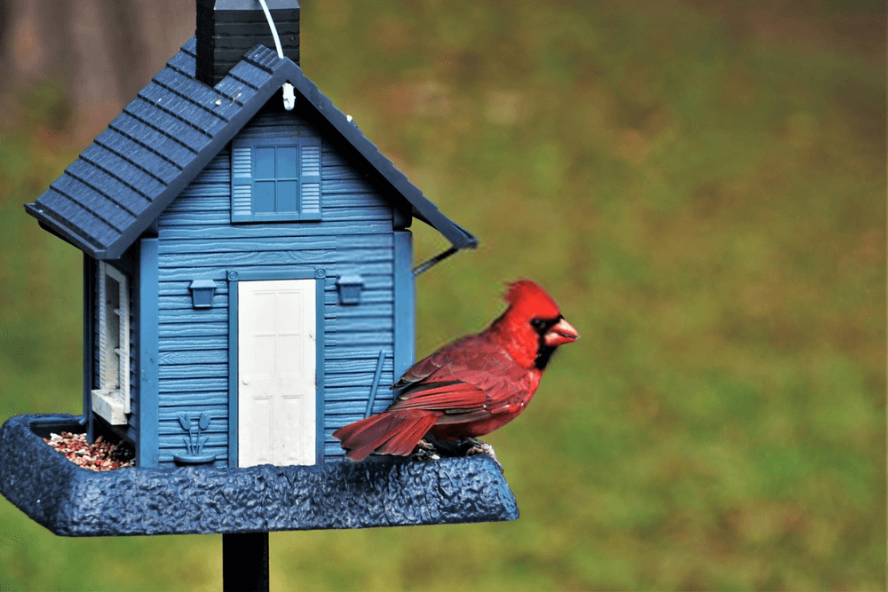 ARE YOUR BIRD HOUSES BEING USED