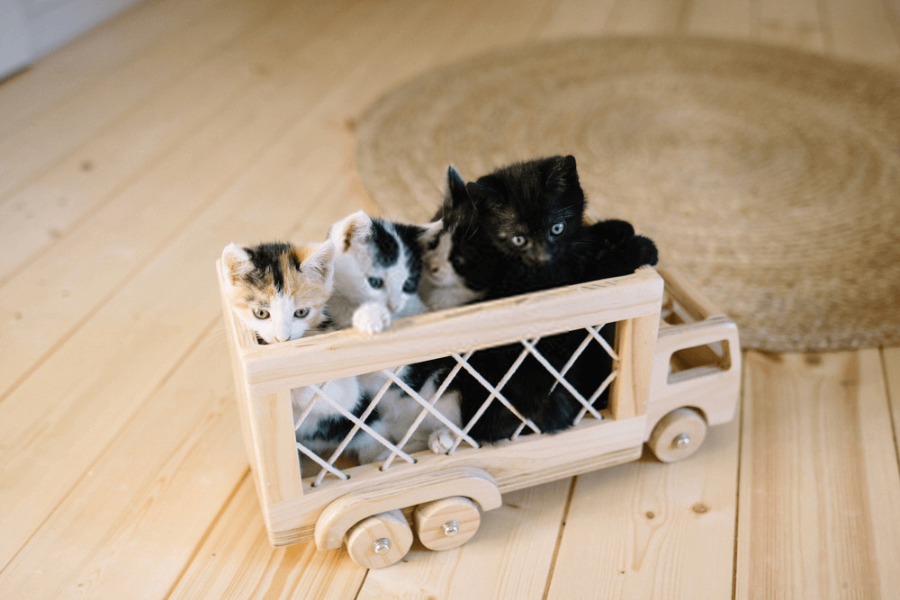 Dog and Cat Breeders