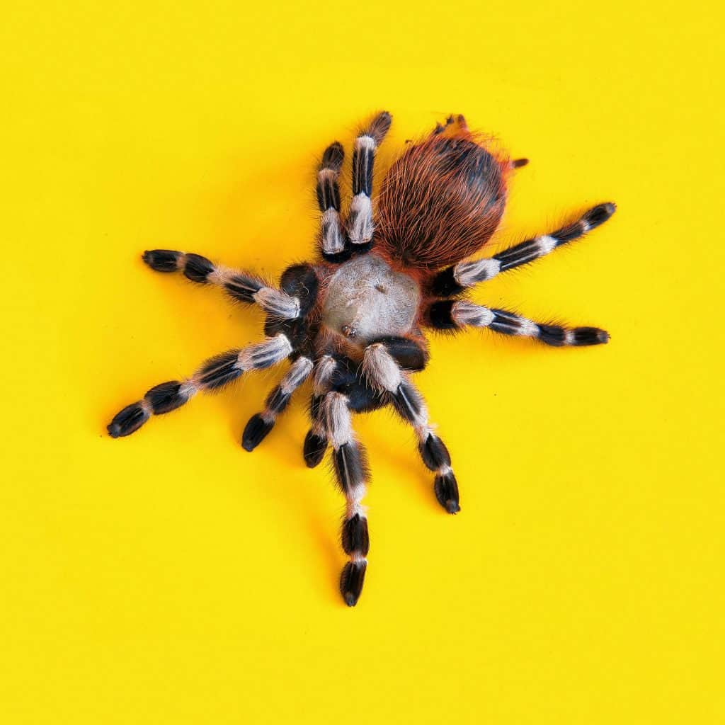 Can You Take A Pet Spider To The Vet