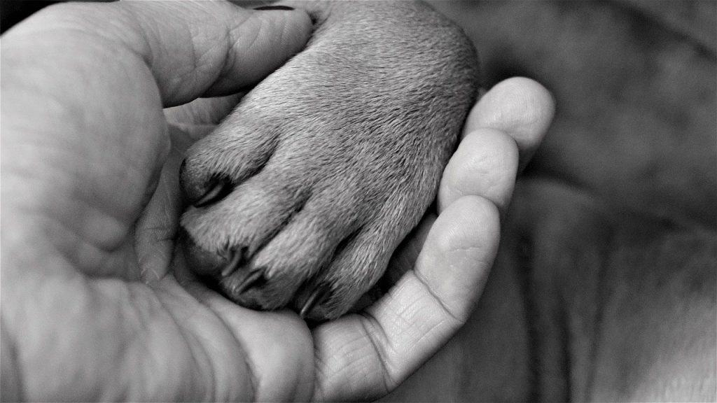 What Does It Mean When A Dog Puts Their Paw On You
